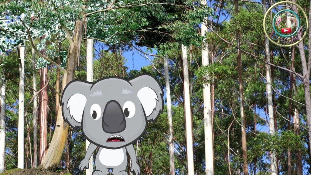 koalalar okaliptus yapragı ile beslenir. hayvanları tanıyalım
