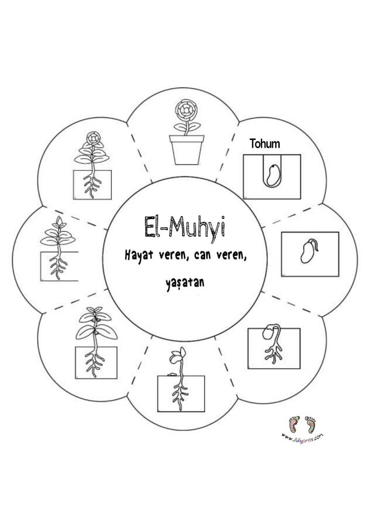 tohumun aşamaları, bitki oluşumu El-Muhyi Etkinliği - Esma'ul Hüsna El Muhyi (cc), Allah'ın isimleri